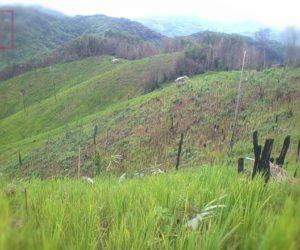 တောင်သူများ၏သီးနှံစပါးများ ကြွက်ဖျက်ဆီးခြင်းနှင့် ပိုးကျခြင်းတို့ တွေ့ကြုံနေရ