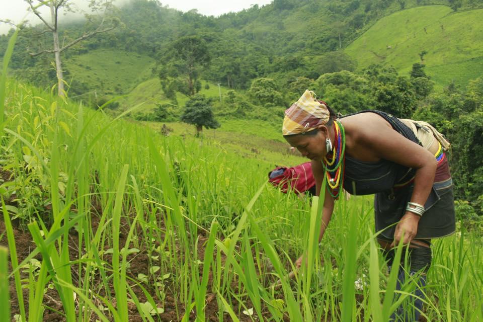 လယ်ယာမြေ လုပ်ပိုင်ခွင့်လက်မှတ် ပုံစံ(၇) ရရှိရေးအတွက် လျှောက်ထားခြင်း