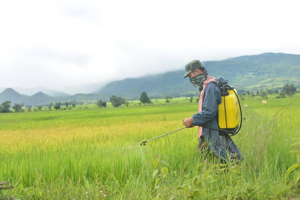 သဘာဝမြေဩဇာကို ကိုယ်ပိုင်ထုတ်လုပ် အသုံးပြုနည်း အသုံးပြုရန် လိုအပ်လာ