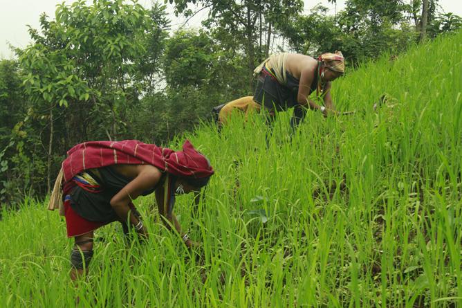 တောင်ပေါ်ဒေသထွက် စိုက်ပျိုးသီးနှံများ ဈေးကောင်းရရေး