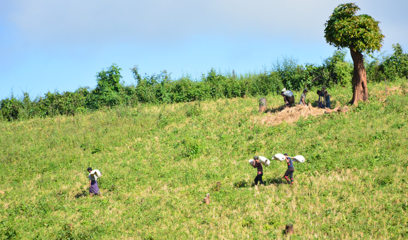 သိမ်မွေ့လှည့်စားသော ရင်းနှီးမြုပ်နှံမှုနှင့် ကယားပြည်နယ်၏ ဟက်တာ ၅ သောင်း စိုက်ပျိုးရေးမြို့တော်စီမံကိန်း