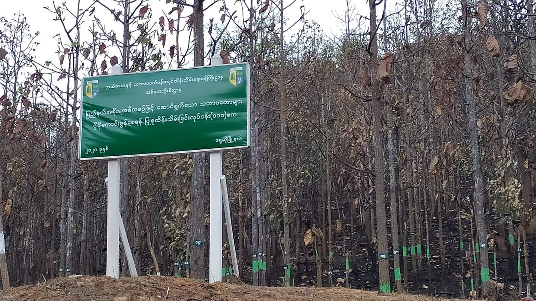 ဒေသခံတွေနဲ့ မညှိနှိုင်းပဲ သဘာဝသစ်တော ဆိုင်းဘုတ်စိုက်ထူမှု ဒေသခံနဲ့ သစ်တောဦးစီးဌာနအကြား နားလည်မှုလွဲ
